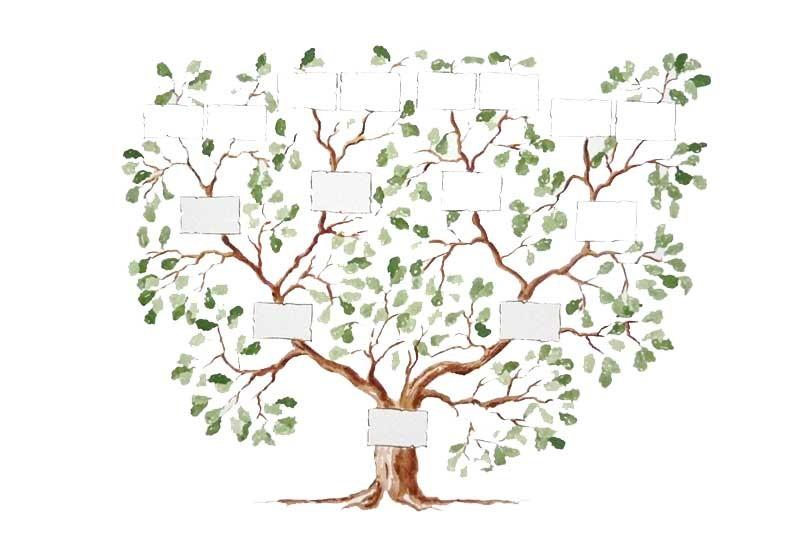 Arbre genealogique les grandes vacances 810x540